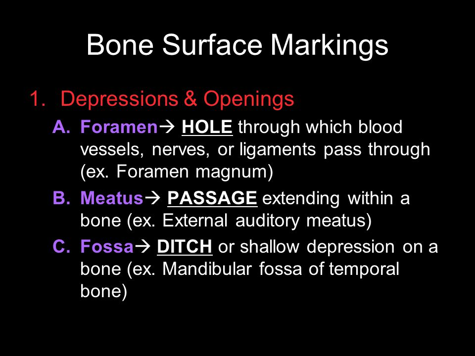 Bone Surface Markings 1.Depressions & Openings A.Foramen  HOLE through which blood vessels, nerves, or ligaments pass through (ex. Foramen magnum) B.