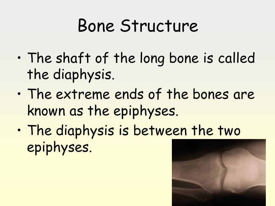 Bone Structure The shaft of the long bone is called the diaphysis. The extreme ends of the bones are known as the epiphyses. The diaphysis is between