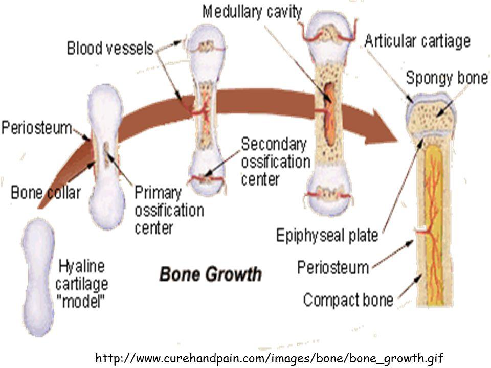http://www.curehandpain.com/images/bone/bone_growth.gif