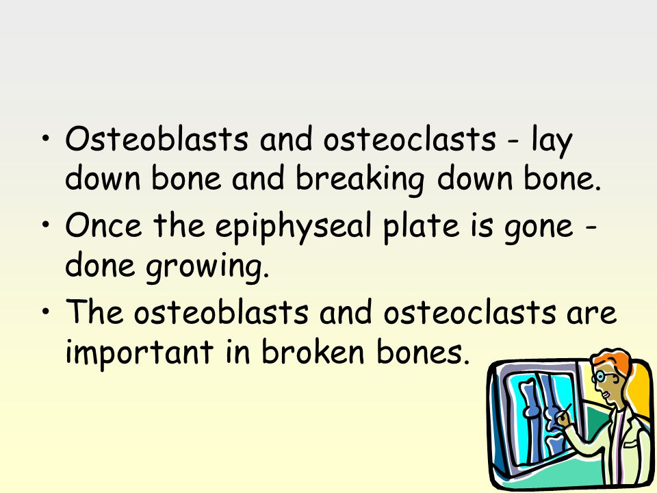 Osteoblasts and osteoclasts - lay down bone and breaking down bone. Once the epiphyseal plate is gone - done growing. The osteoblasts and osteoclasts