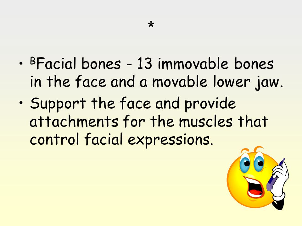* B Facial bones - 13 immovable bones in the face and a movable lower jaw. Support the face and provide attachments for the muscles that control facia