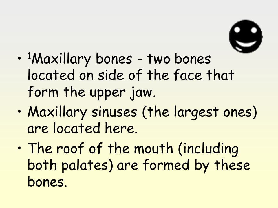1 Maxillary bones - two bones located on side of the face that form the upper jaw. Maxillary sinuses (the largest ones) are located here. The roof of