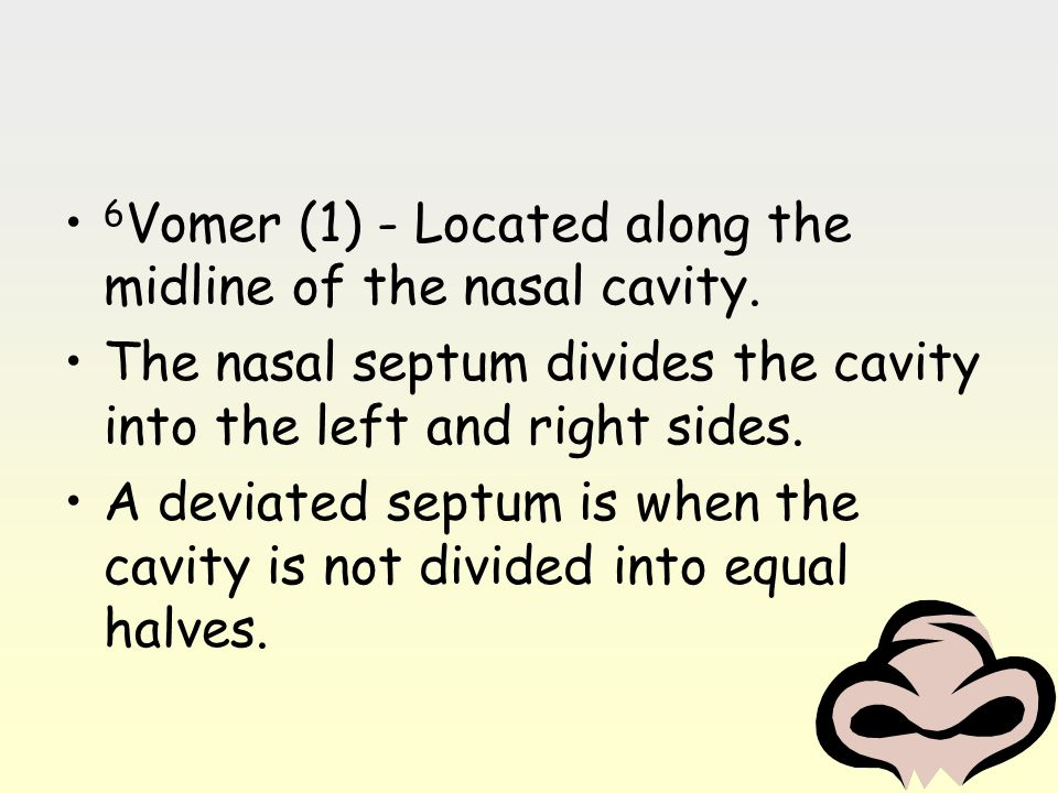 6 Vomer (1) - Located along the midline of the nasal cavity. The nasal septum divides the cavity into the left and right sides. A deviated septum is w