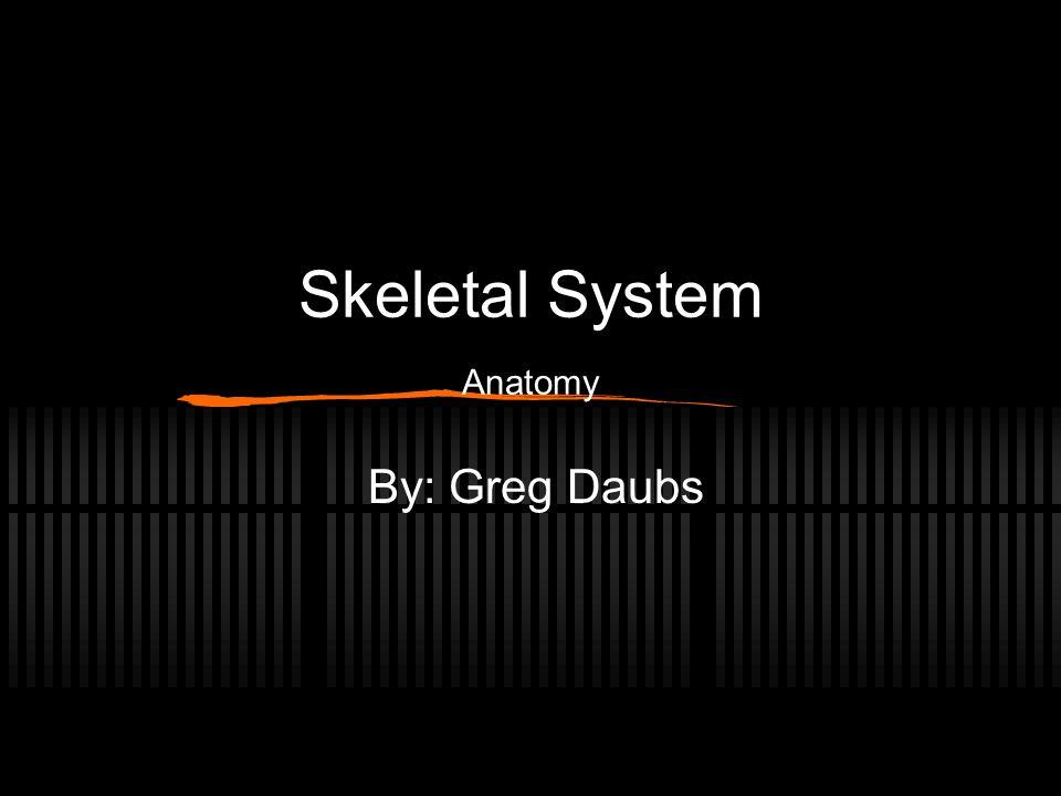 Skeletal System Anatomy By: Greg Daubs