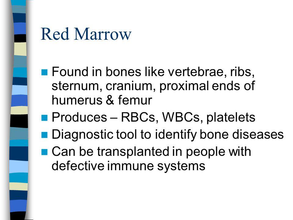 Red Marrow Found in bones like vertebrae, ribs, sternum, cranium, proximal ends of humerus & femur Produces – RBCs, WBCs, platelets Diagnostic tool to