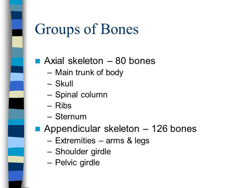 Groups of Bones Axial skeleton – 80 bones –Main trunk of body –Skull –Spinal column –Ribs –Sternum Appendicular skeleton – 126 bones –Extremities – ar