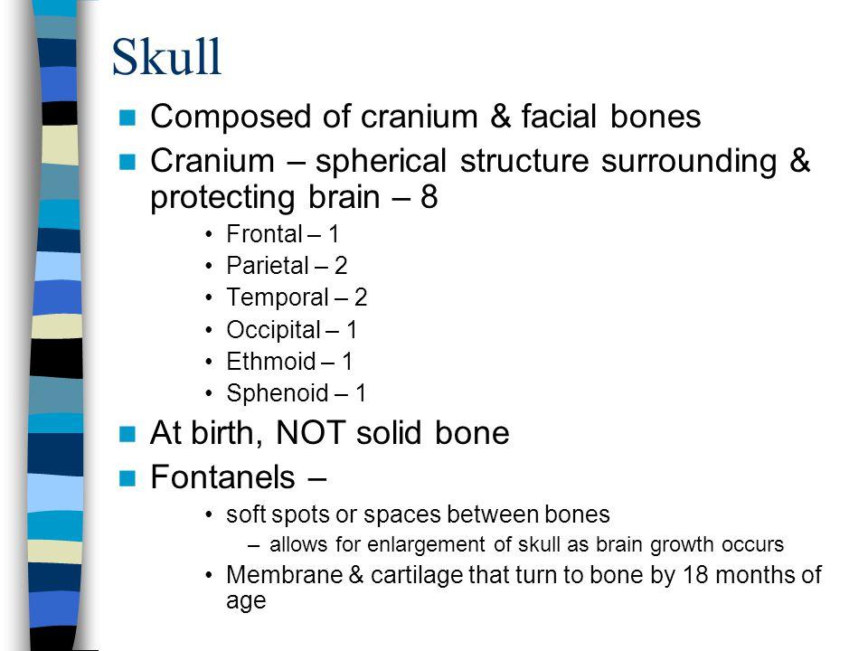 Skull Composed of cranium & facial bones Cranium – spherical structure surrounding & protecting brain – 8 Frontal – 1 Parietal – 2 Temporal – 2 Occipi