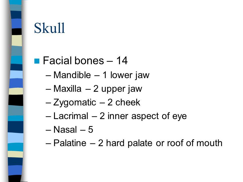 Skull Facial bones – 14 –Mandible – 1 lower jaw –Maxilla – 2 upper jaw –Zygomatic – 2 cheek –Lacrimal – 2 inner aspect of eye –Nasal – 5 –Palatine – 2