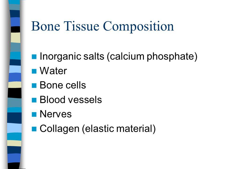 Bone Tissue Composition Inorganic salts (calcium phosphate) Water Bone cells Blood vessels Nerves Collagen (elastic material)