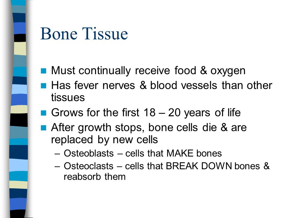 Bone Tissue Must continually receive food & oxygen Has fever nerves & blood vessels than other tissues Grows for the first 18 – 20 years of life After