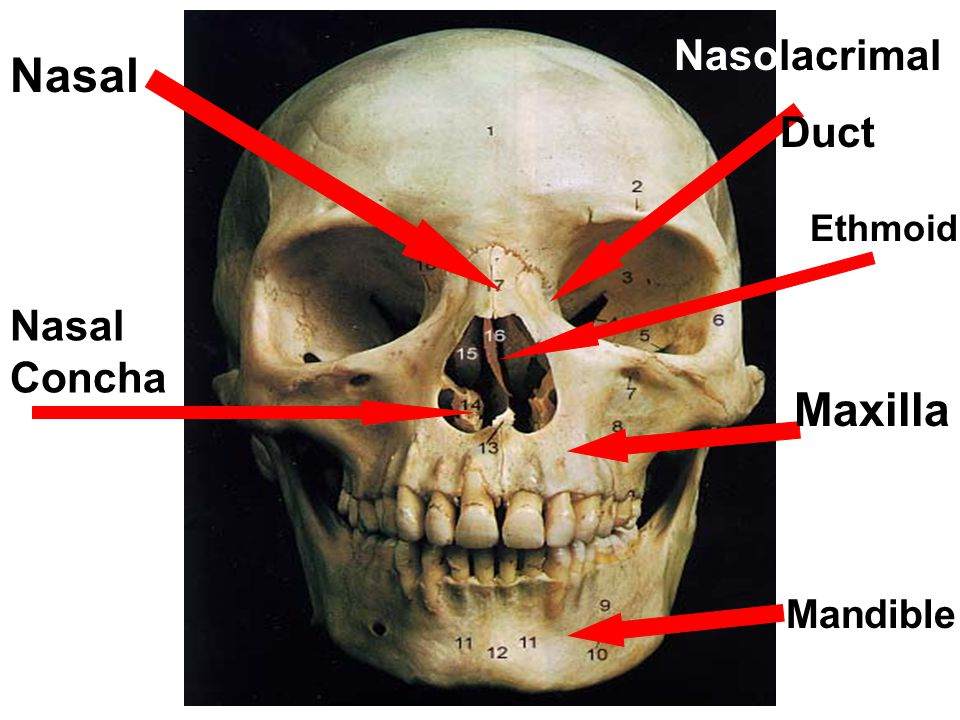 WHY DO WE NEED A SKULL?