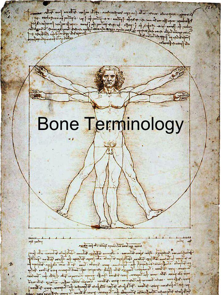Bone Terminology