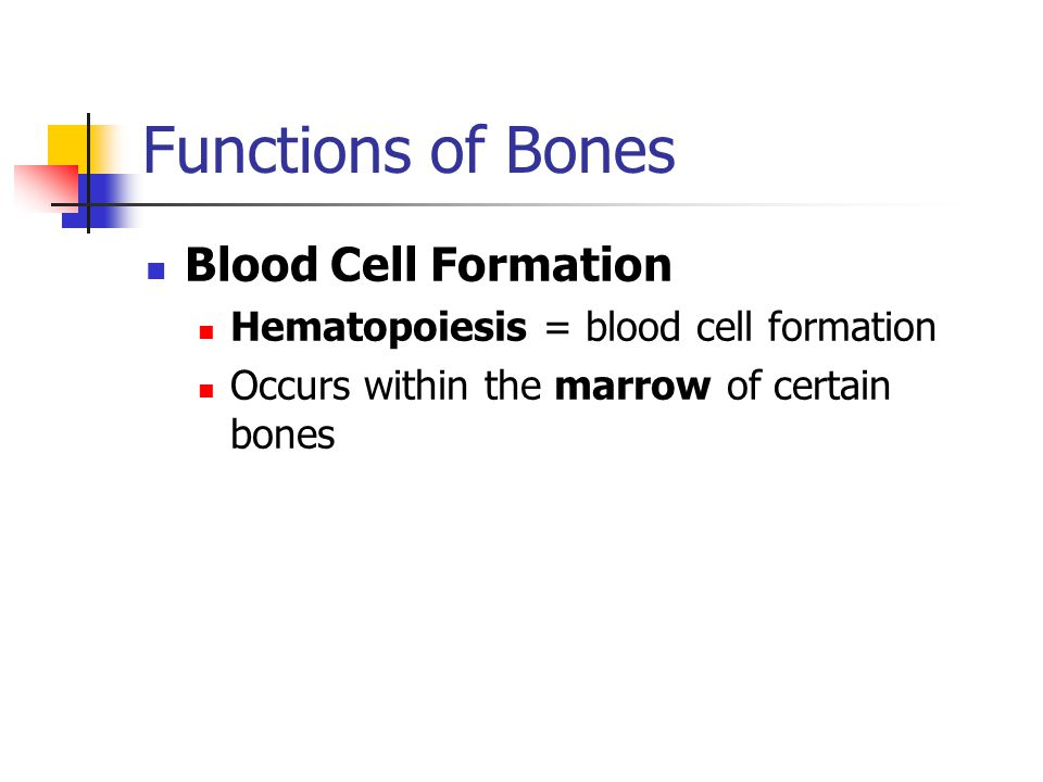 Functions of Bones Blood Cell Formation Hematopoiesis = blood cell formation Occurs within the marrow of certain bones