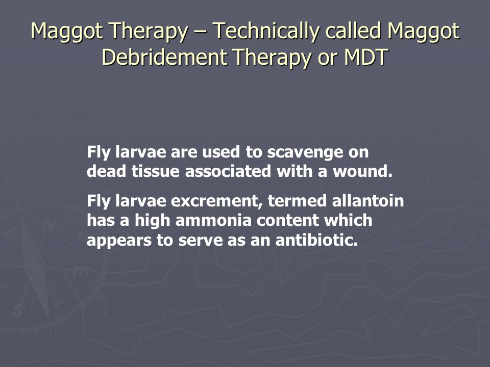 Maggot Therapy – Technically called Maggot Debridement Therapy or MDT Fly larvae are used to scavenge on dead tissue associated with a wound.
