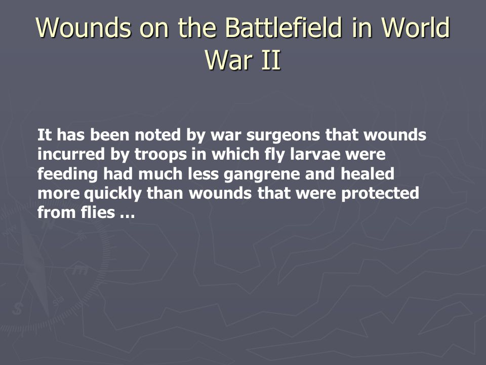 Wounds on the Battlefield in World War II It has been noted by war surgeons that wounds incurred by troops in which fly larvae were feeding had much l