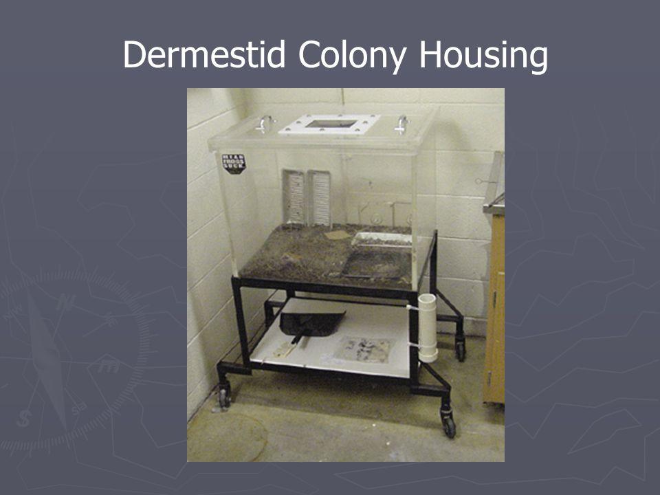 Dermestid Colony Housing