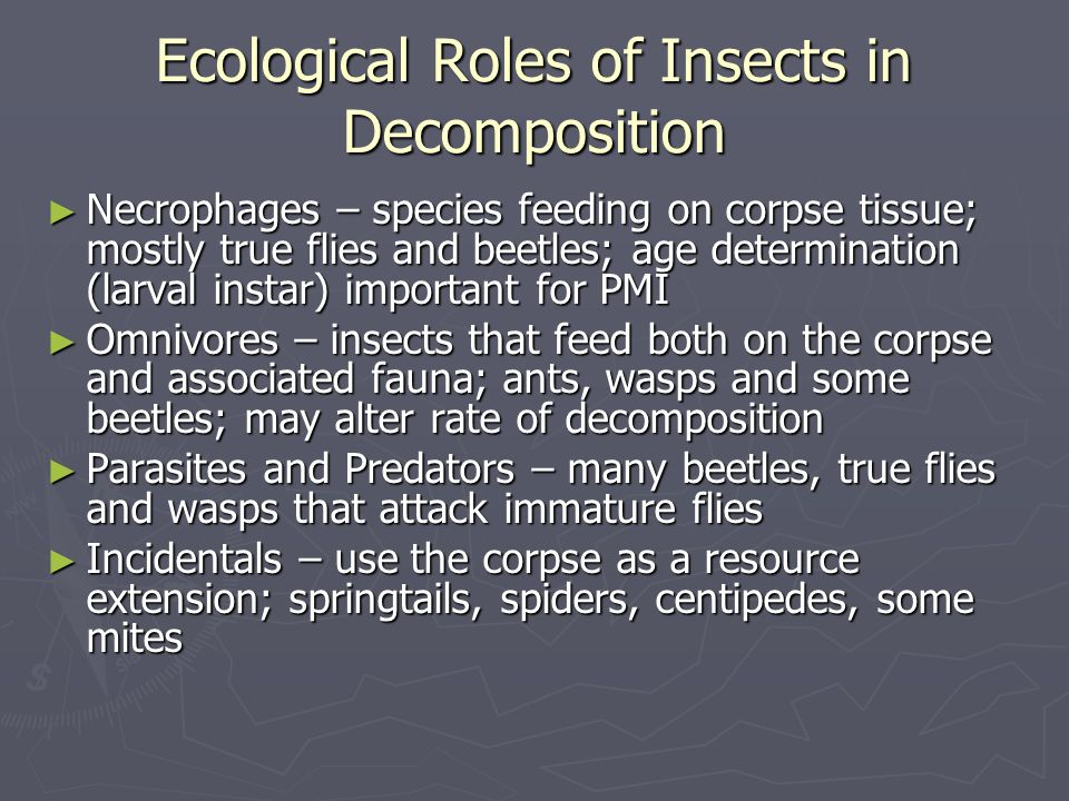 Ecological Roles of Insects in Decomposition ► Necrophages – species feeding on corpse tissue; mostly true flies and beetles; age determination (larva