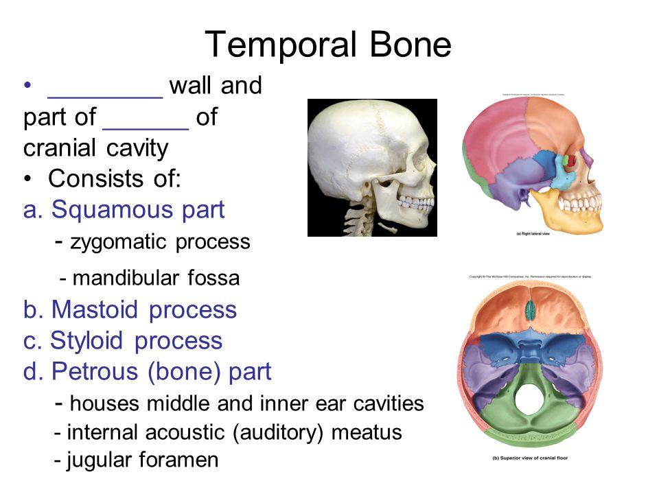 Homework 1.Describe the cranial sutures and fontanelles.