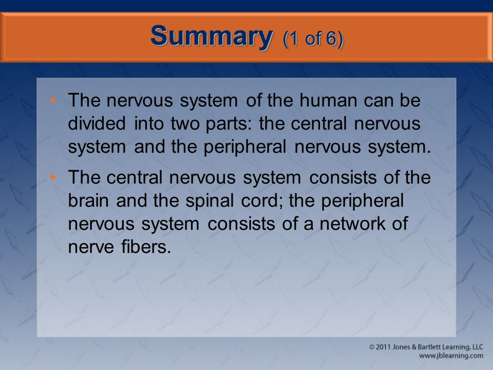 Summary (1 of 6) The nervous system of the human can be divided into two parts: the central nervous system and the peripheral nervous system. The cent
