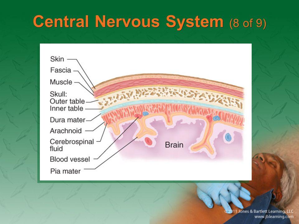 Central Nervous System (8 of 9)