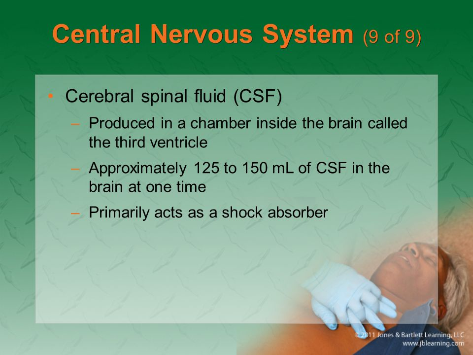 Central Nervous System (9 of 9) Cerebral spinal fluid (CSF) –Produced in a chamber inside the brain called the third ventricle –Approximately 125 to 1