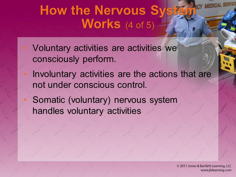 How the Nervous System Works (4 of 5) Voluntary activities are activities we consciously perform. Involuntary activities are the actions that are not