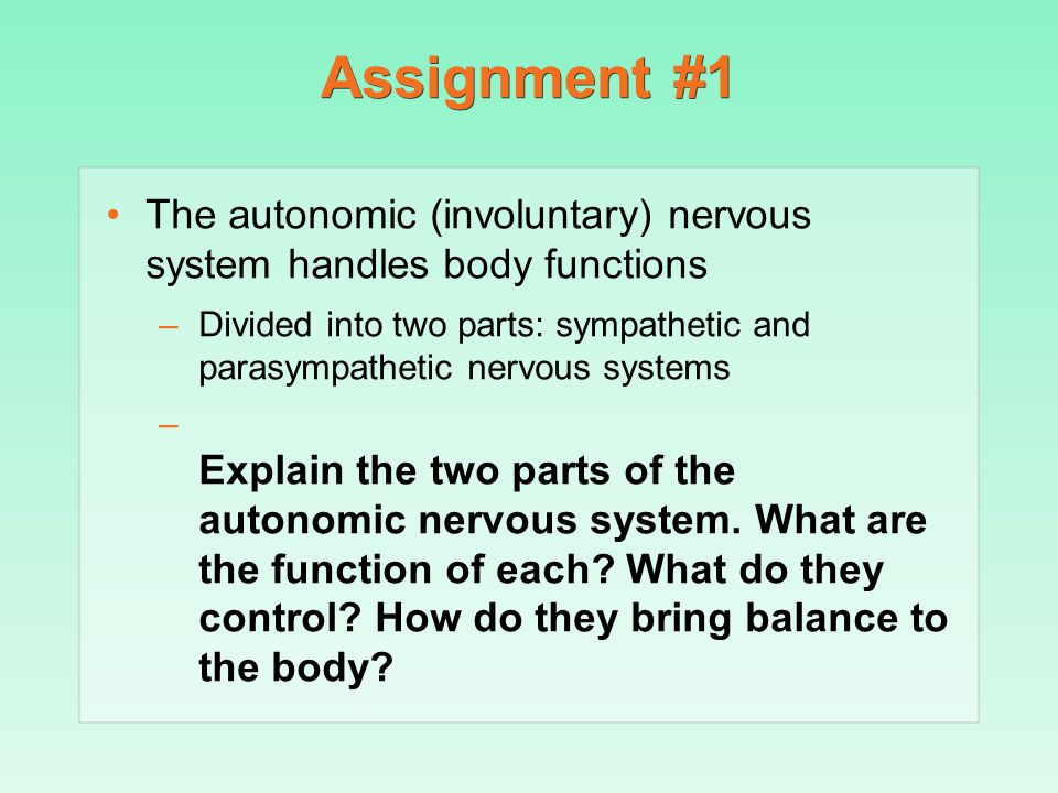 The autonomic (involuntary) nervous system handles body functions –Divided into two parts: sympathetic and parasympathetic nervous systems – Explain t