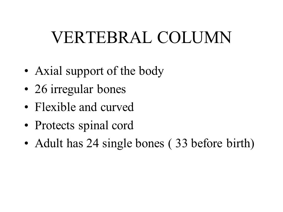 VERTEBRAL COLUMN Axial support of the body 26 irregular bones Flexible and curved Protects spinal cord Adult has 24 single bones ( 33 before birth)