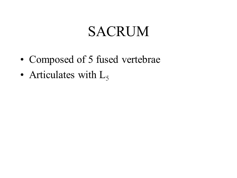 SACRUM Composed of 5 fused vertebrae Articulates with L 5
