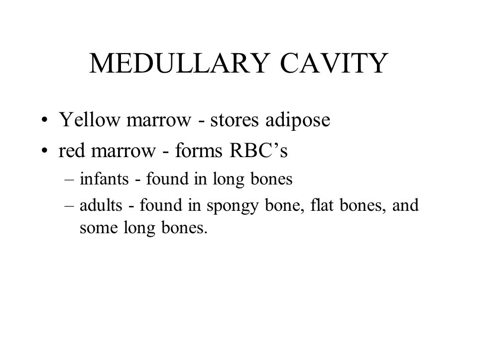 MEDULLARY CAVITY Yellow marrow - stores adipose red marrow - forms RBC's –infants - found in long bones –adults - found in spongy bone, flat bones, and some long bones.
