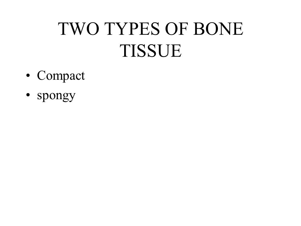 TWO TYPES OF BONE TISSUE Compact spongy