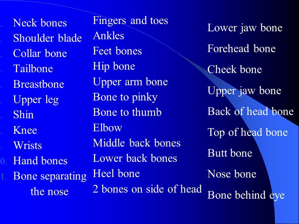 1. Neck bones 2. Shoulder blade 3. Collar bone 4. Tailbone 5. Breastbone 6. Upper leg 7. Shin 8. Knee 9. Wrists 10. Hand bones 11. Bone separating the