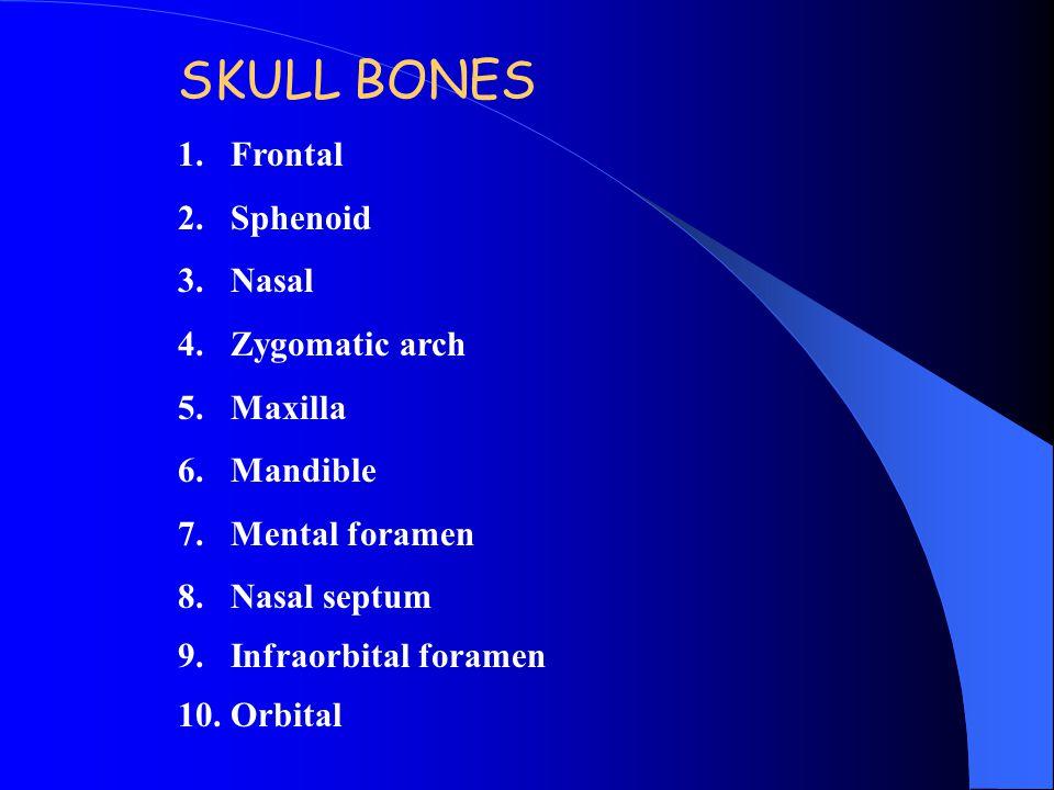 SKULL BONES 1.Frontal 2.Sphenoid 3.Nasal 4.Zygomatic arch 5.Maxilla 6.Mandible 7.Mental foramen 8.Nasal septum 9.Infraorbital foramen 10.Orbital