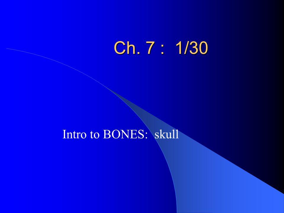Ch. 7 : 1/30 Intro to BONES: skull
