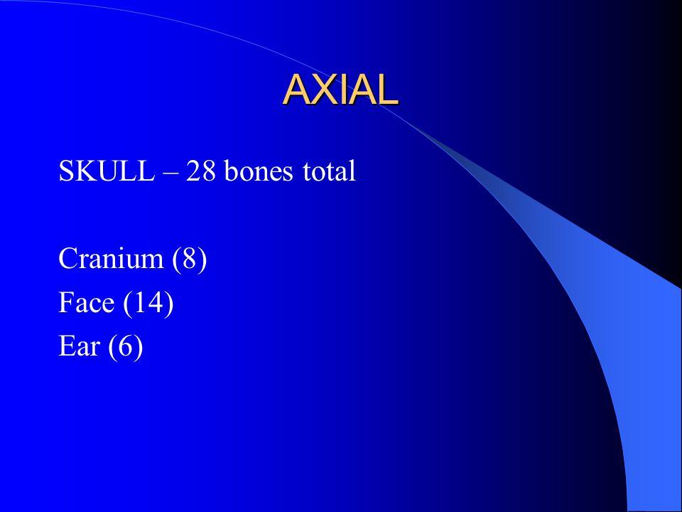 AXIAL SKULL – 28 bones total Cranium (8) Face (14) Ear (6)