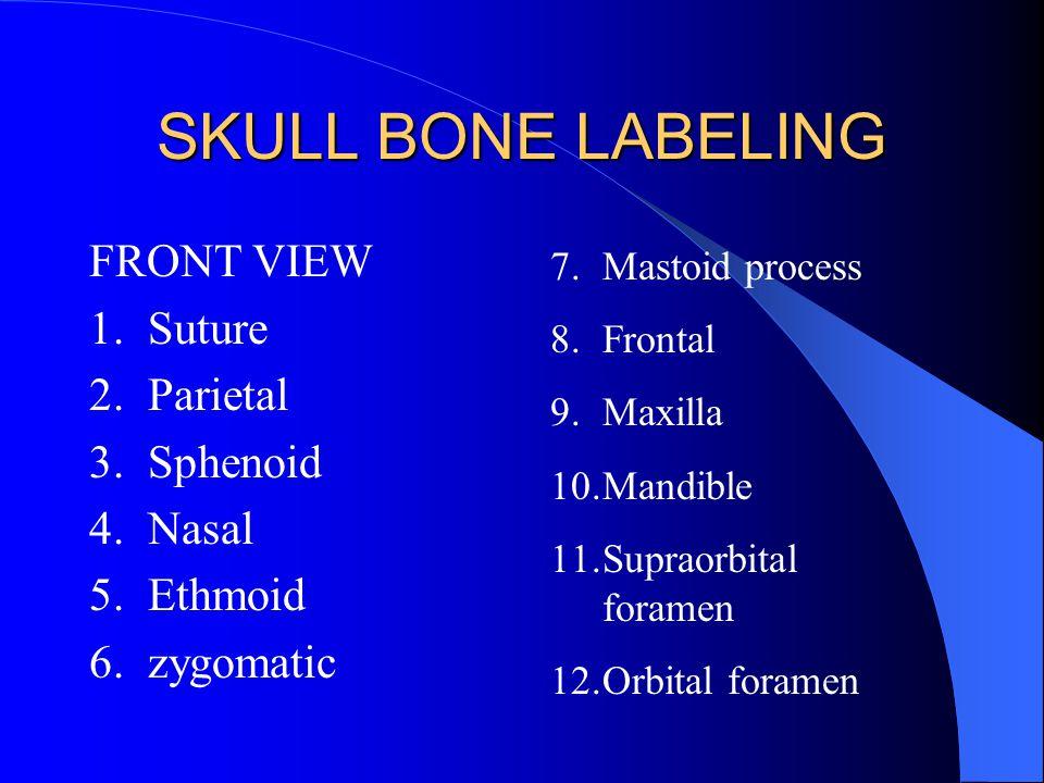 SKULL BONE LABELING FRONT VIEW 1. Suture 2. Parietal 3. Sphenoid 4. Nasal 5. Ethmoid 6. zygomatic 7.Mastoid process 8.Frontal 9.Maxilla 10.Mandible 11