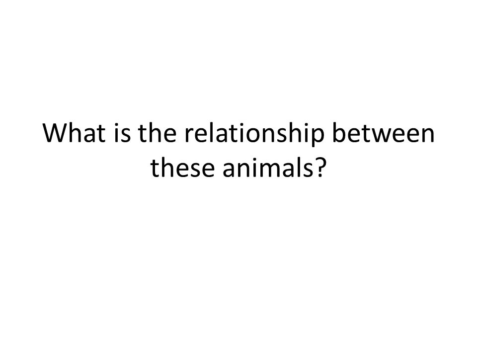 What is the relationship between these animals