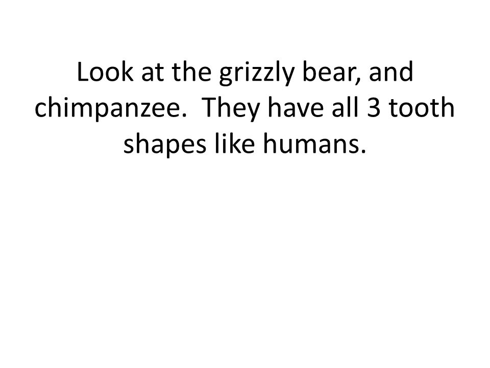 Look at the grizzly bear, and chimpanzee. They have all 3 tooth shapes like humans.