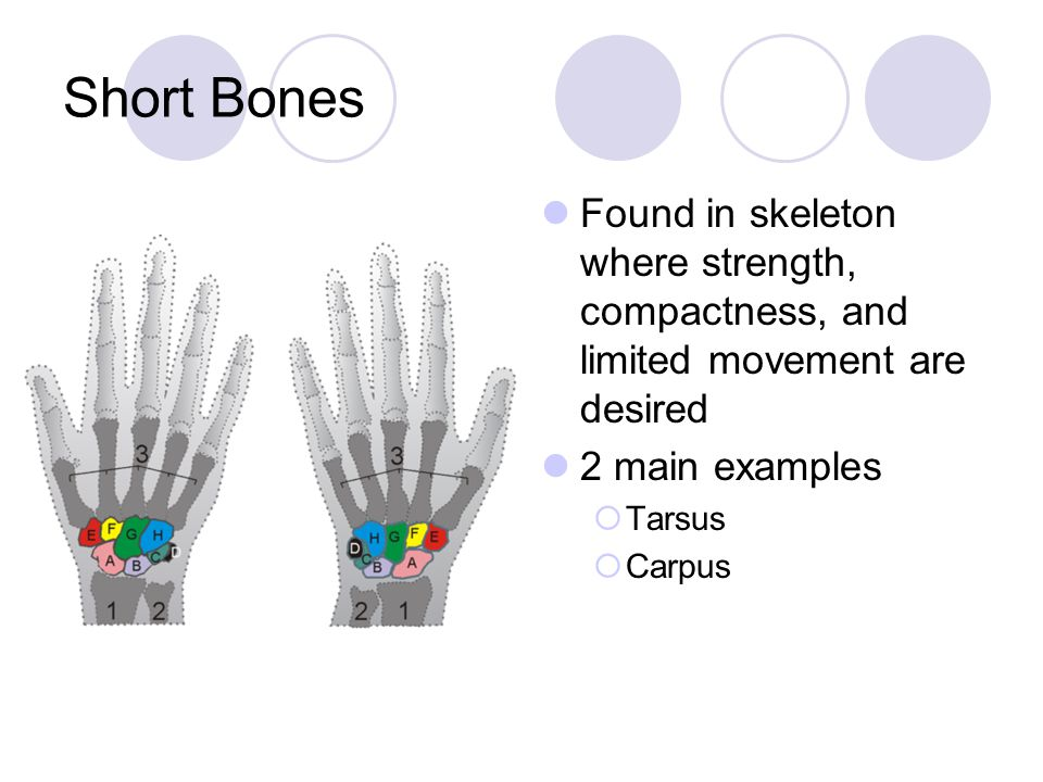 Short Bones Found in skeleton where strength, compactness, and limited movement are desired 2 main examples  Tarsus  Carpus