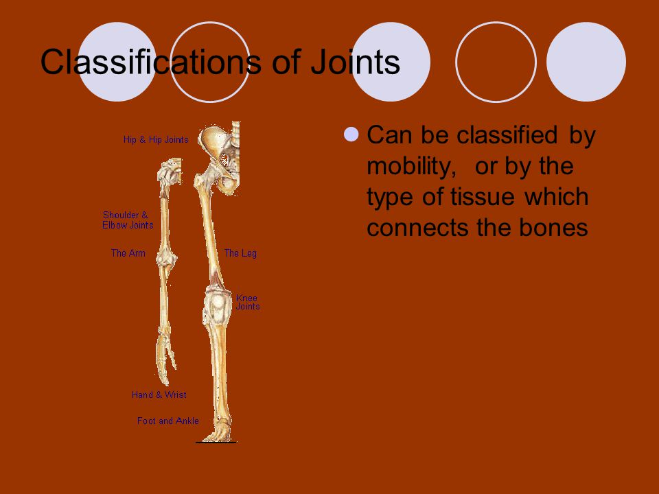 Classifications of Joints Can be classified by mobility, or by the type of tissue which connects the bones
