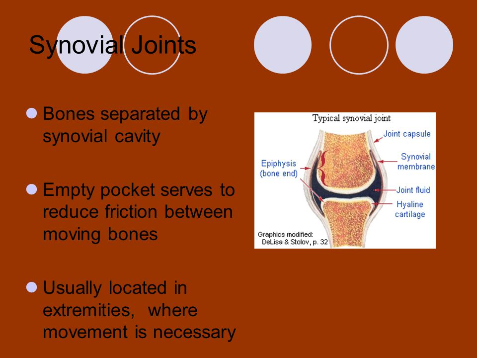 Synovial Joints Bones separated by synovial cavity Empty pocket serves to reduce friction between moving bones Usually located in extremities, where m