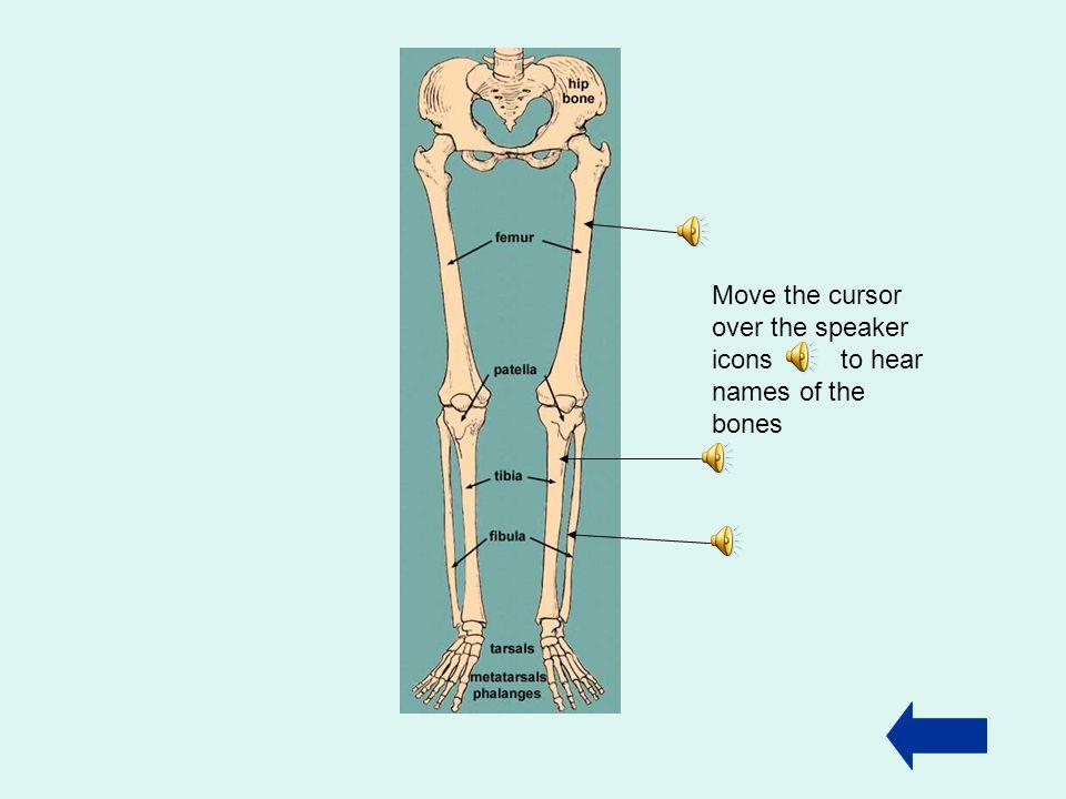 Arm bones Upper arm Lower arm