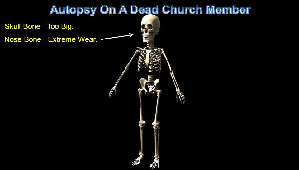 Skull Bone - Too Big. Nose Bone - Extreme Wear.