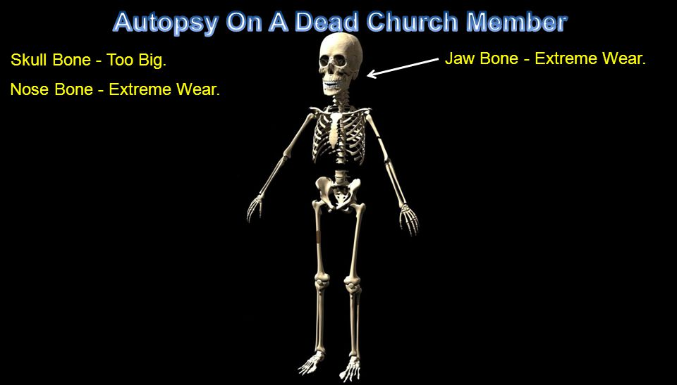 Skull Bone - Too Big. Nose Bone - Extreme Wear. Jaw Bone - Extreme Wear.
