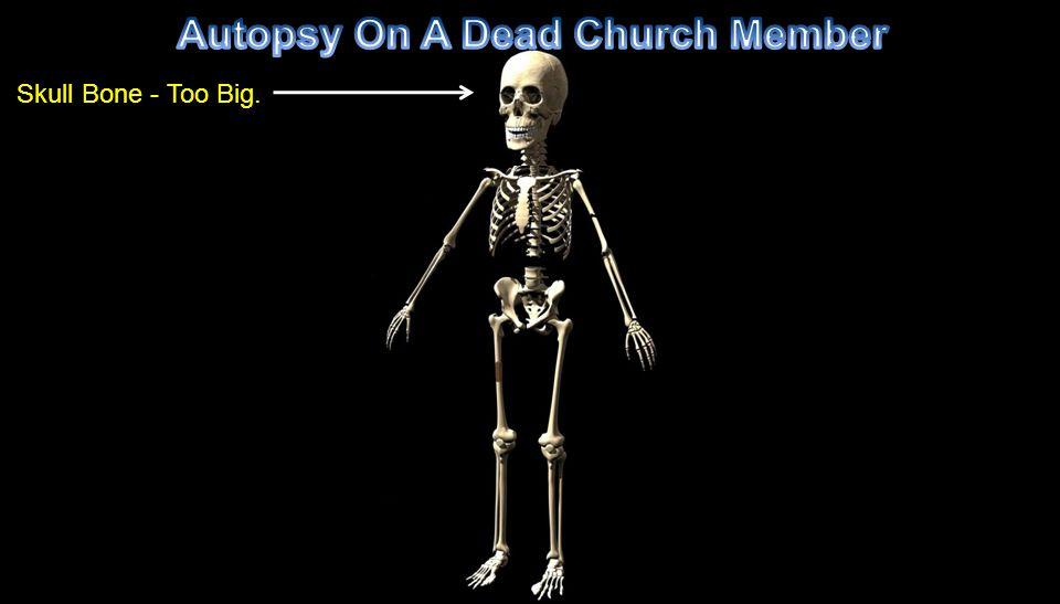 Skull Bone - Too Big.
