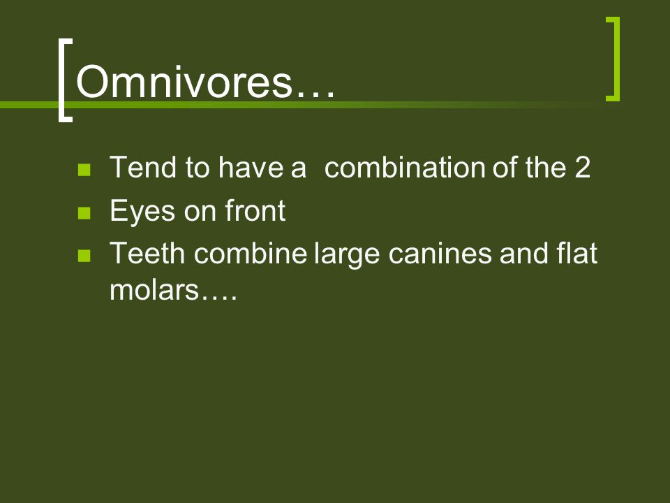 Omnivores… Tend to have a combination of the 2 Eyes on front Teeth combine large canines and flat molars….