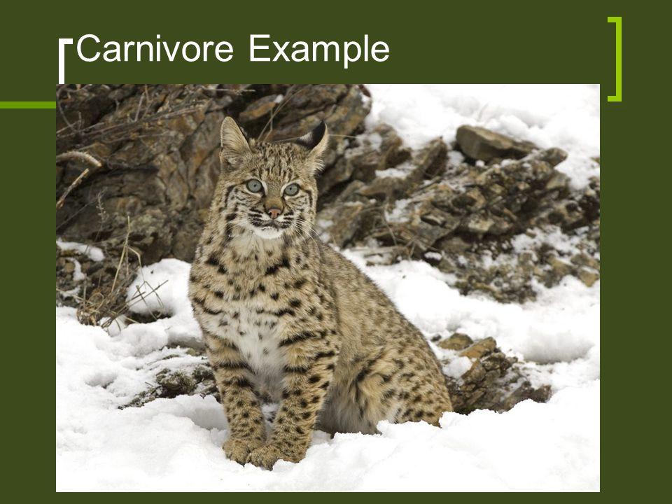Carnivore Example