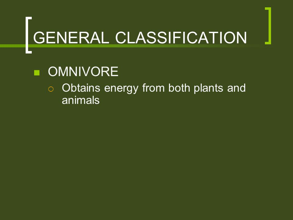 GENERAL CLASSIFICATION OMNIVORE  Obtains energy from both plants and animals