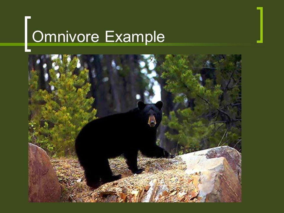 Omnivore Example