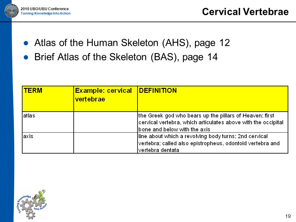 2010 UBO/UBU Conference Turning Knowledge Into Action Cervical Vertebrae Atlas of the Human Skeleton (AHS), page 12 Brief Atlas of the Skeleton (BAS), page 14 19